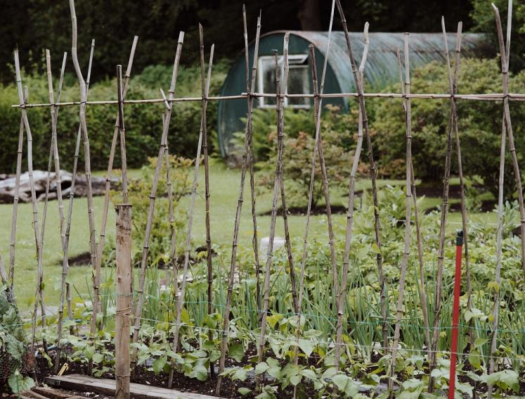 Allotment with vegetable patch