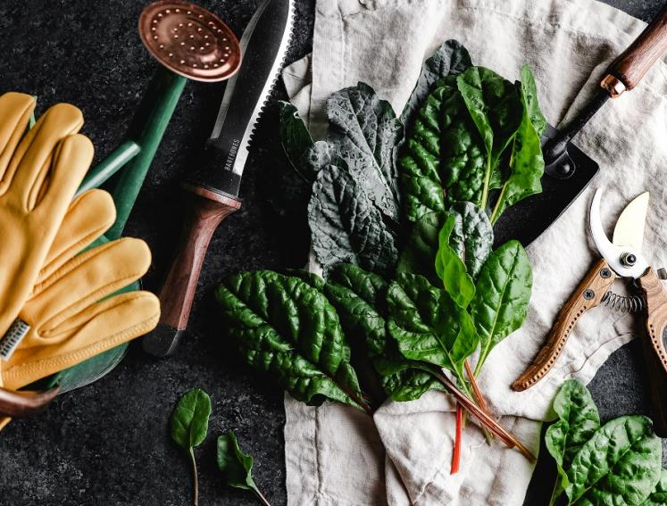 Gardening tools with plants